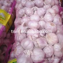 cold storage garlic high quality garlic 2020 crop