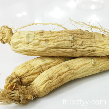 ginseng thé racine alimentaire
