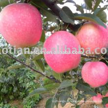 Gala de manzanas frescas