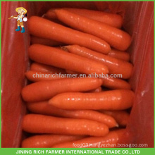 China New Crop Fresh Carrot to Mid-Market