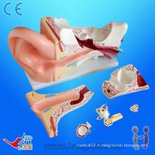 Modèle d'oreille d'anatomie pvc avancé, modèle d'anatomie de l'oreille