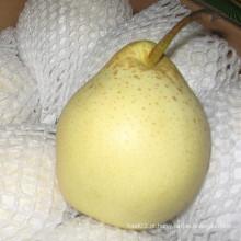 Fornecimento de frutas frescas Ya Pear