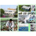 Botanical Pesticide Against Powdery Mildew on Vegetables