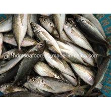 Скумбрия из свежей рыбы (14-18см)