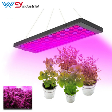 45W led coltivano luci e piantine