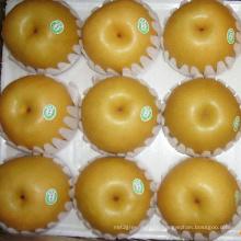 High Quality Fresh Chinese Fengshui Pear