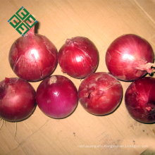 export fresh small onion from China