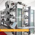 Горячий Гальванизированный Материал рамки H 5 ярусов Птицеводческого оборудования для кур-несушек/слоями/яйца куриные