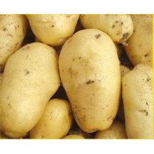 Top Quality Competitive Price Fresh Potato