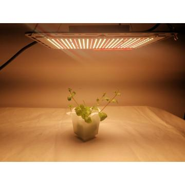 2021 Samsung LM301B LED Grow Light Plantas de interior