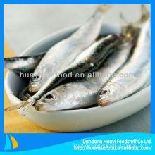 fresh frozen sardine sardine process
