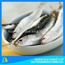 Processo de sardinha fresca congelada