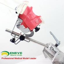 DENTAL02-2 (12561) Tabela Phantom Head Tooth preparar modelos de prática