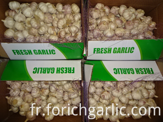 Normal White Garlic Best Price