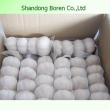 Export Heißer Verkauf Normaler weißer Knoblauch