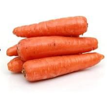 2021 Promotional Export Natural New Harvest Hot Selling Good Chinese Fresh Carrot