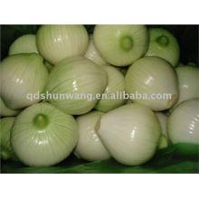 2011 fresh chinese onion