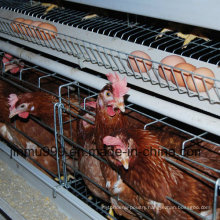 Poultry Equipment Automatic Chicken Cage