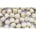 Organischer Lotus Samen, chinesischer Lotus Samen