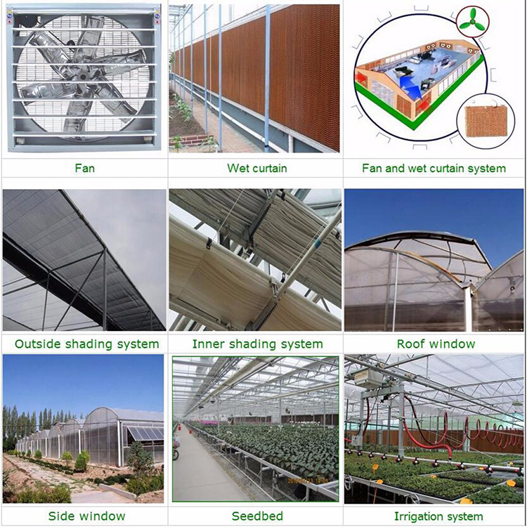 Arch type green house