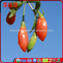 dehydrated food goji berry ningxia goji ningxia goji Berry Pure natural