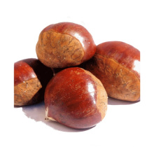2021 New Season Fresh Vegetable Export With International Certificationss Fresh Chestnut