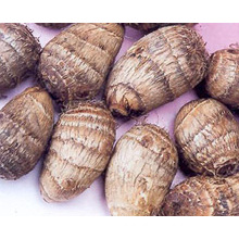 Professional New Crop Fresh Taro (60-80g)