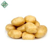 Patatas de hortalizas frescas de Bangladesh / Patata fresca de nueva cosecha