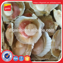 Hot Sell New Crop Frozen Half Shell Scallops roe on