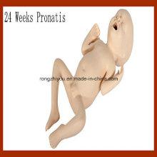 Vivid Medical Nurning Modell 24 Wochen Pronatis