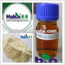 Hohe Enzymaktivität Lipase 10000-100000u / g