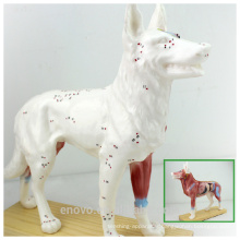 WHOLESALE VETERINARY MODEL 12005 Anaimal Anatomical Models Dog Acupuncture Model