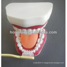 Modèle de soins dentaires médicaux de style nouveau, modèle dentaire dentaire avec langue