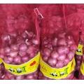 Cebolla roja china de calidad