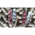 Chinês de alta qualidade Shandong vermelho quatro amêndoas Amendoim