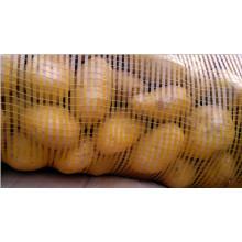 New Crop Fresh Potato for Bangladesh Market