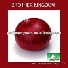 Shandong fresh yellow Onion