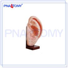 ПНТ-AM24 анатомические модели Акупунктуру уха