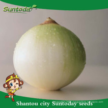 Suntoday vegetable F1 Organic garden buying online red purple onion seeds long shelf supplier(81003)
