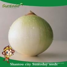 Suntoday vegetable F1 Organic garden buying online red purple onion seeds long shelf supplier(81003)