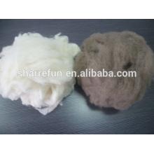 poils de raton laveur ébouriffés pour filature