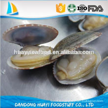 ready to eat frozen boiled short necked clam with shell
