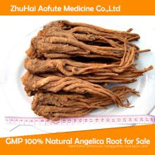 GMP 100% Natural Angelica Root para la venta