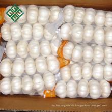 frischer reiner weißer Knoblauch mit Kartonverpackung