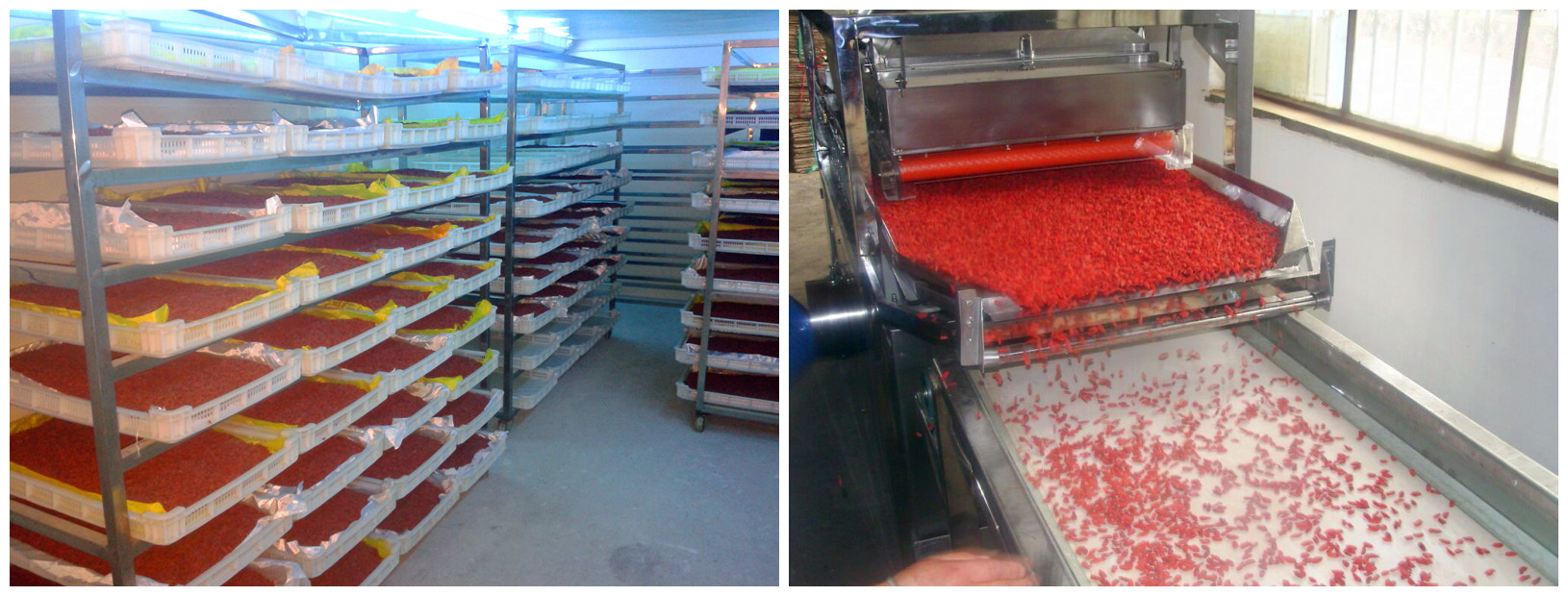Goji drying and grading