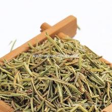 Primeiro grau chá de erva Rosemary
