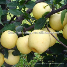 crown pear in China