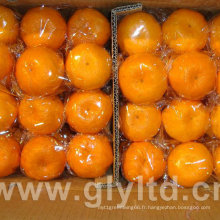 Nouvelle culture de haute qualité de mandarine