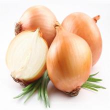 High Quality Fresh Vegetables Onion
