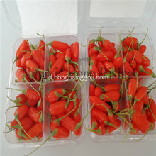 Ningxia Organnic goji berry superfruit wolfberry